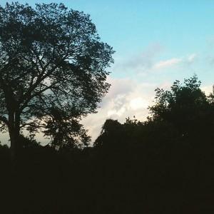 Belmont sky.